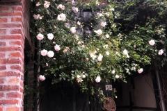 Roses voorhuis