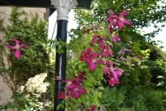 Bloemen naast terrace